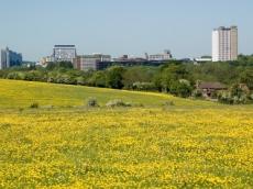 Bexley park