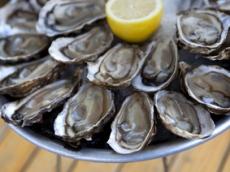 hastings seafood festival